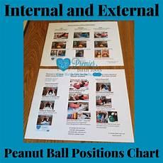 Peanut Ball Chart Internal Amp External Peanut Ball Chart Premier