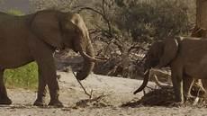 Malvorlage Afrikanischer Elefant Afrikanischer Elefant Stehen Namibia Rm 741