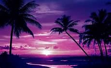 strand solnedgang tropisk strand solnedg 229 ng palmer 889wm fototapetonline se