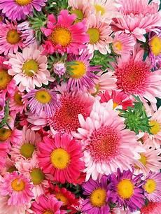 flower wallpaper for iphone xr hd flowers wallpaper iphone 2019 3d iphone wallpaper