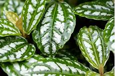 Low Light Stem Plants 17 Easy To Care For Low Light Houseplants You Will Love