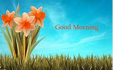 Flower Wallpaper Morning Hd by 157 Morning Flowers Images Photos Pics Hd Here