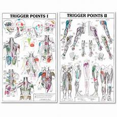 Trigger Point Charts I And Ii Trigl Trigger Points