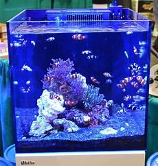 Saltwater Fish Tank Lights Saltwater Tanks Of The Aquatic Experience 2016
