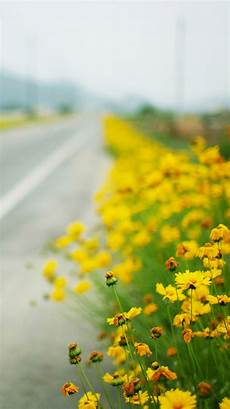 Yellow Wallpaper 4k Iphone by Yellow Flowers Iphone Wallpapers Hd Gt Yodobi