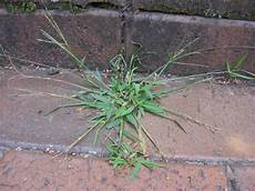 Control Crab Grass Fight Crabgrass With These Tips Hgtv
