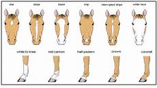 C Amp M Explanations Horse Markings Horse Color Chart