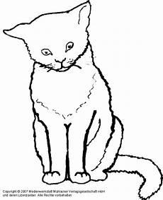 Malvorlage Sitzende Katze Katzen Bilder Zum Ausmalen Newtemp