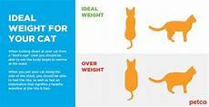 Average Cat Weight Chart Is My Cat Overweight Petco