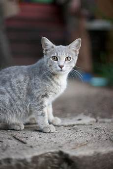 Light Grey Kitten 25 Names For Southern Cats Southern Living