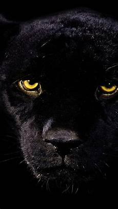 iphone 6 wallpaper black panther 30 best iphone 6 wallpapers backgrounds in hd quality