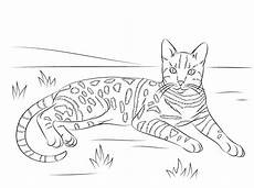 Malvorlage Katze Getigert Cat Coloring Pages For Adults Best Coloring Pages For