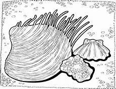 Malvorlagen Qualle Kostenlos Gratis Qualle Mit Muschel Ausmalbild Malvorlage Tiere