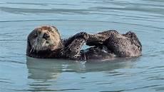 Wildlife Major 5 Hour Kenai Fjords Wildlife Cruise Major Marine Tours