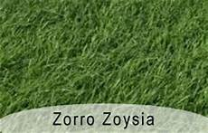 Zorro Zoysia Yard Supply Garners Ferry Landscape Supply