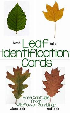 Oak Leaf Id Chart Free Printable Leaf Identification Cards Let S Go Play