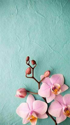 Flower Cell Phone Wallpaper by Pink Flower Cellphone Wallpaper 2019 Wallpapers