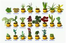 Any One Have A Picture Guide To The Plants Last Day Of