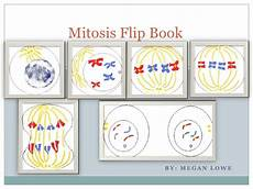 Cell Cycle Flip Book Mitosis Flip Book