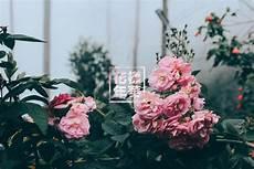 aesthetic flower desktop wallpaper cata shinee day on quot here some