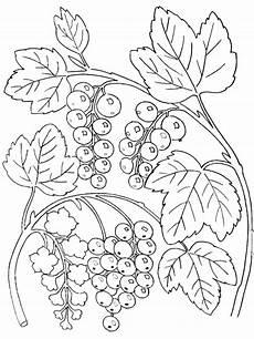 pflanzen 6 malvorlagen ausmalbilder und kritzel zeichnungen