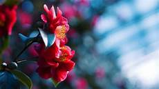 flower wallpaper hd for pc flowers blossom blue blurred background wallpaper