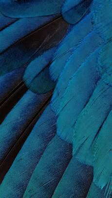 iphone blue feather wallpaper all ios 9 beta 3 static wallpapers