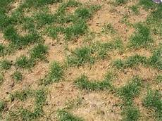 Brown Patch Grass Why Do Brown Spots Appear In My Grass