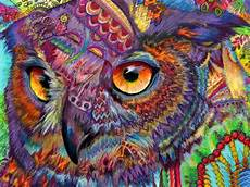 Colorful Owl Art Original Art Drawing 16x20 Owl Concentration Colorful Owl