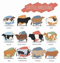Dairy Cow Chart 20 Different Types Of Cows From Around The World Chart