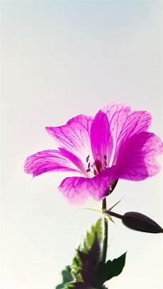 live flower wallpaper iphone purple flower macro iphone 7 wallpaper floral