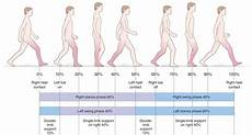 Gait Cycle Gait And Posture Analysis Musculoskeletal Key