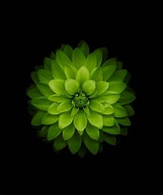 Green Flower Iphone Wallpaper Hd by Green Flower I Green Lotus Wallpaper Apple