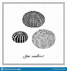 Collection Of Hand Drawn Greetings Words Three Sea Urchins Seashell Black And White Square Card