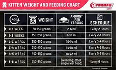 How Much To Feed A Cat Chart Kitten Feeding Guide How Much Should You Feed Your Kitten