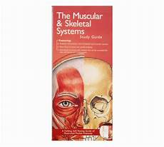 Muscular And Skeletal System Pocket Study Guide 2nd