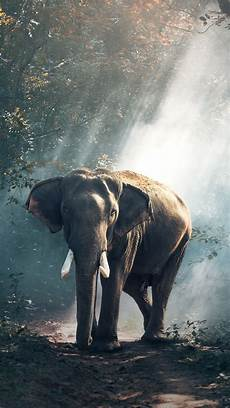 iphone x wallpaper elephant elephant screensavers and wallpaper 69 images
