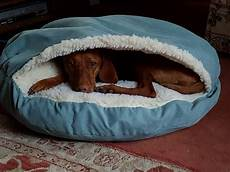 snoozer luxury cozy cave bed care 4 dogs on the go