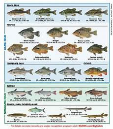 Florida Fish Id Chart Freshwater Fish Of Florida Florida Freshwater Fishing