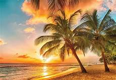 strand solnedgang tropisk strand solnedgang palmer fototapet 3393wm se