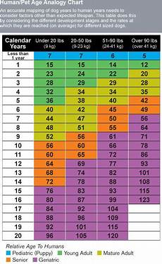 Puppy Age Chart Puppy Teeth Age Chart Exploredogs Com