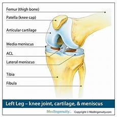 Right Knee Anatomy Orthopedic Anatomy Library Northwest Hills Surgical
