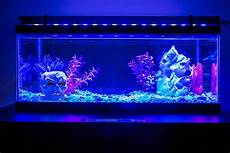Led Black Light For Fish Tank What Do You Need For A Fish Tank 15 Things Fish Life Today