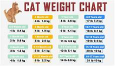 Average Cat Weight Chart Easy Cat Weight Chart By Age In Kg Ib 2020