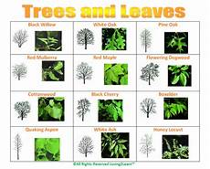 Tree Leaves Chart Challenges Charts Science Charts Trees And Leaves