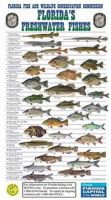 Florida Fish Id Chart Need Help Identifying Fish Florida Freshwater