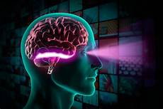 Neuroscientists Find Evidence That The Brain S