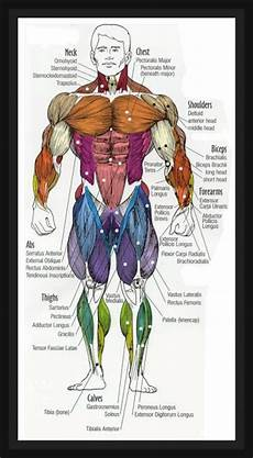Full Body Anatomy Chart Fat Loss Building Muscle Amp Staying Fit Human Anatomy Diagram