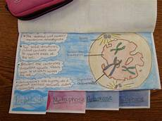 Cell Cycle Flip Book Cell Cycle Book Ms Bautista 2013 2014 Science Cells