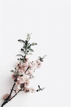 Minimalist Aesthetic Flower Wallpaper by Flower Arrangements Aesthetic Flora Upg Studio In